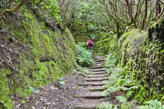 El bosque encantado, en Tenerife
