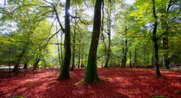 Qué ver en Navarra: 10 lugares fascinantes