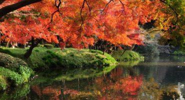 Un alto en el camino: los jardines más bonitos del mundo