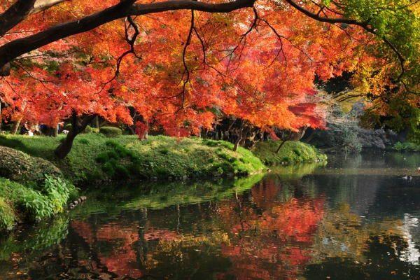 Jardines Hoishikawa Korakuen, en Tokio