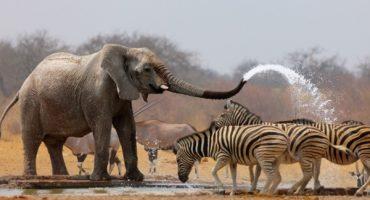 Los 5 destinos de safari más bellos del mundo