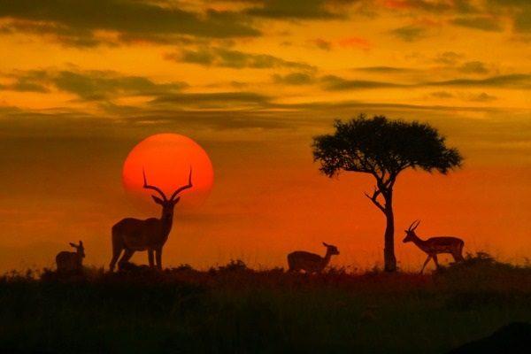 Safari en el Parque Kruger