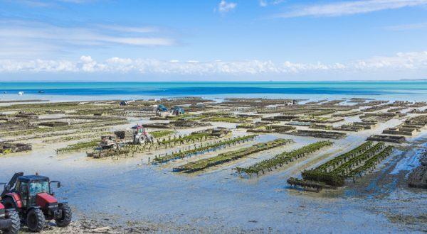 Criadero de ostras en Carcale (Bretaña francesa)
