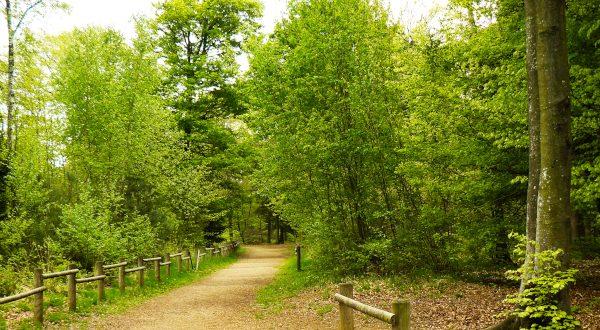 Parque Natural en Reims