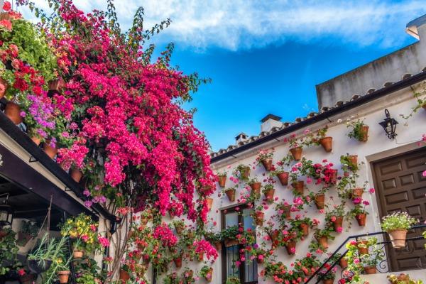 Geranios en un patio de Córdoba