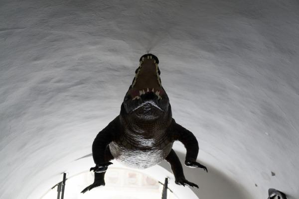 El cocodrilo de Brno