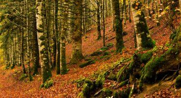 Los 10 bosques más bonitos de Francia