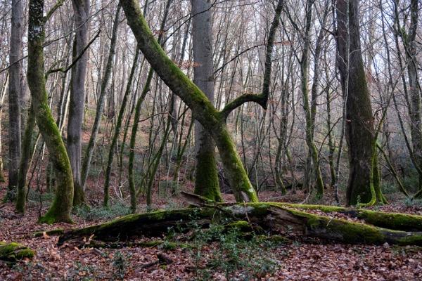 Bosque de Tronçais (Francia)