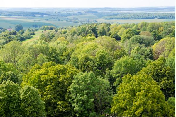 Bosque de Verdún (Francia)