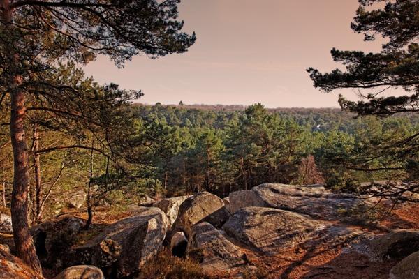 Bosque de Fontainebleau (Francia)