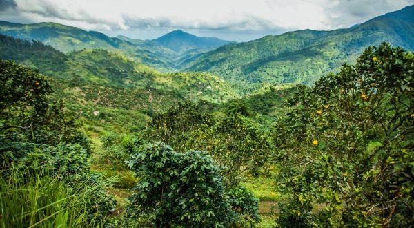 Blue Montains de Jamaica