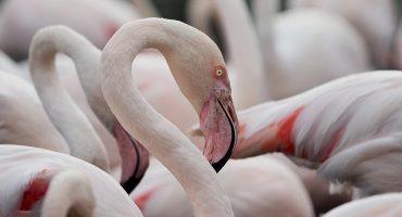 Turismo ornitológico: los mejores destinos en España para avistar pájaros